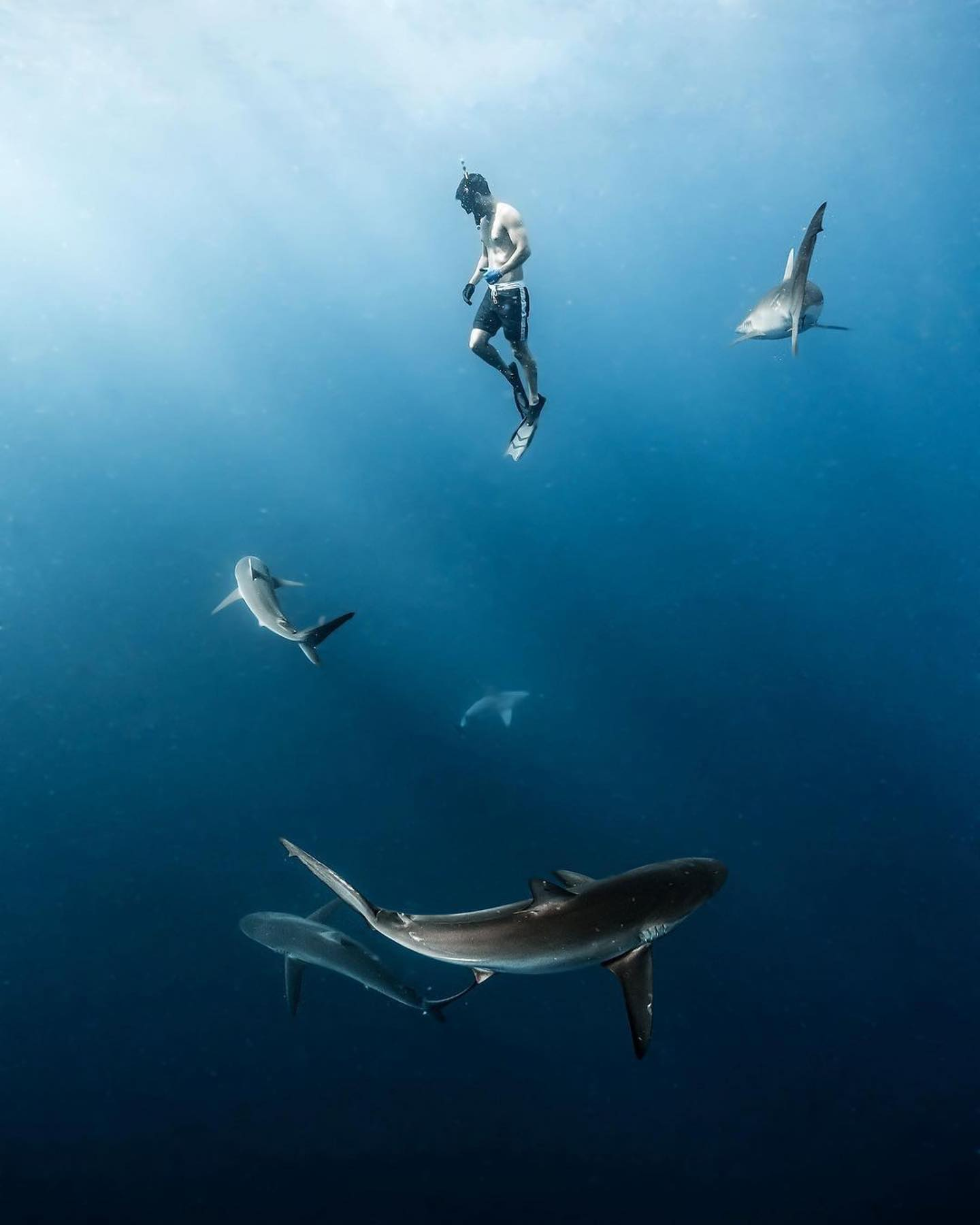 An image of a shark diver with sharks circling on a shark diving adventure.