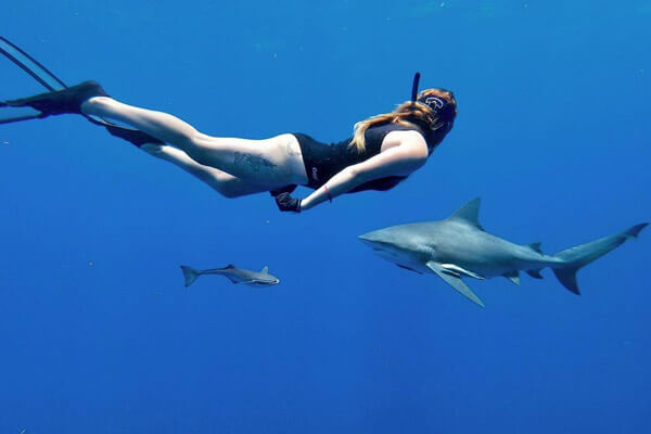 An image of a diver in the water with a powerful shark of the USVI.
