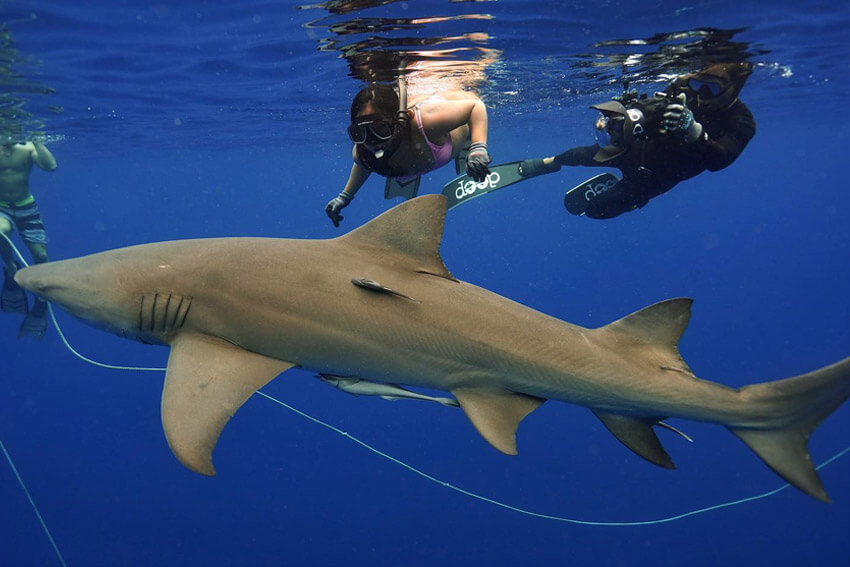 An image of divers and cameraman filming the experience underwater on a USVI shark diving adventure.