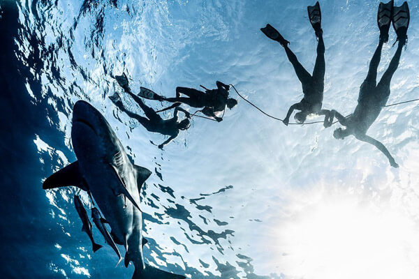 An image of a shark from below looking up at divers on a US Virgin Islands dive adventure.