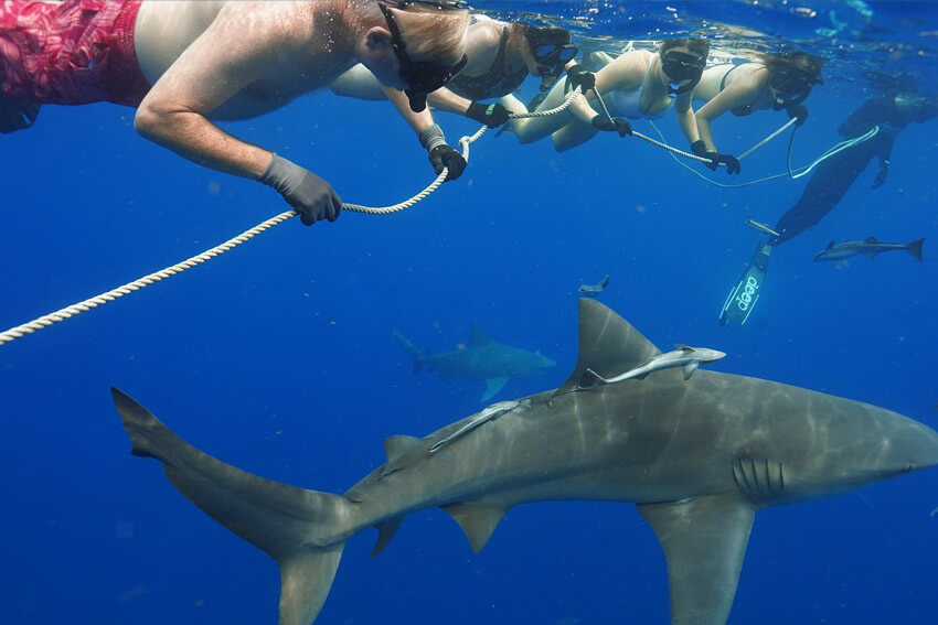 An image of divers on a USVI Shark Diving adventure off of St. Thomas.