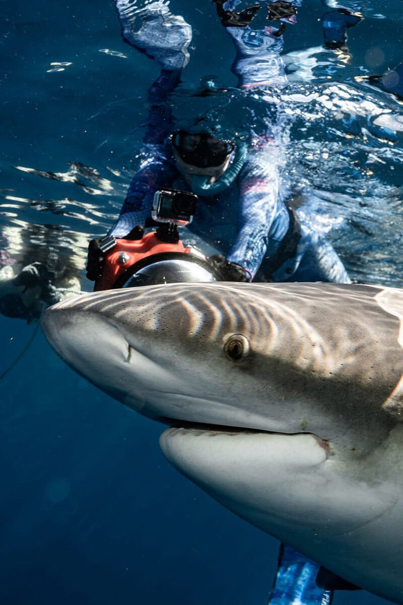 An image of a shark up close and personal with an underwater cameraman in the waters of the Caribbean.