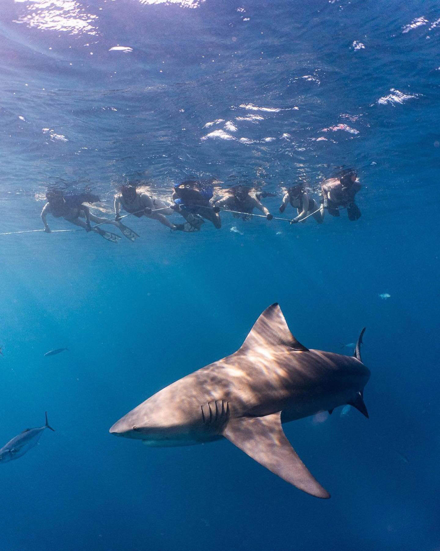 An image of a group of shark diving caribbean particpants with USVI Shark Diving