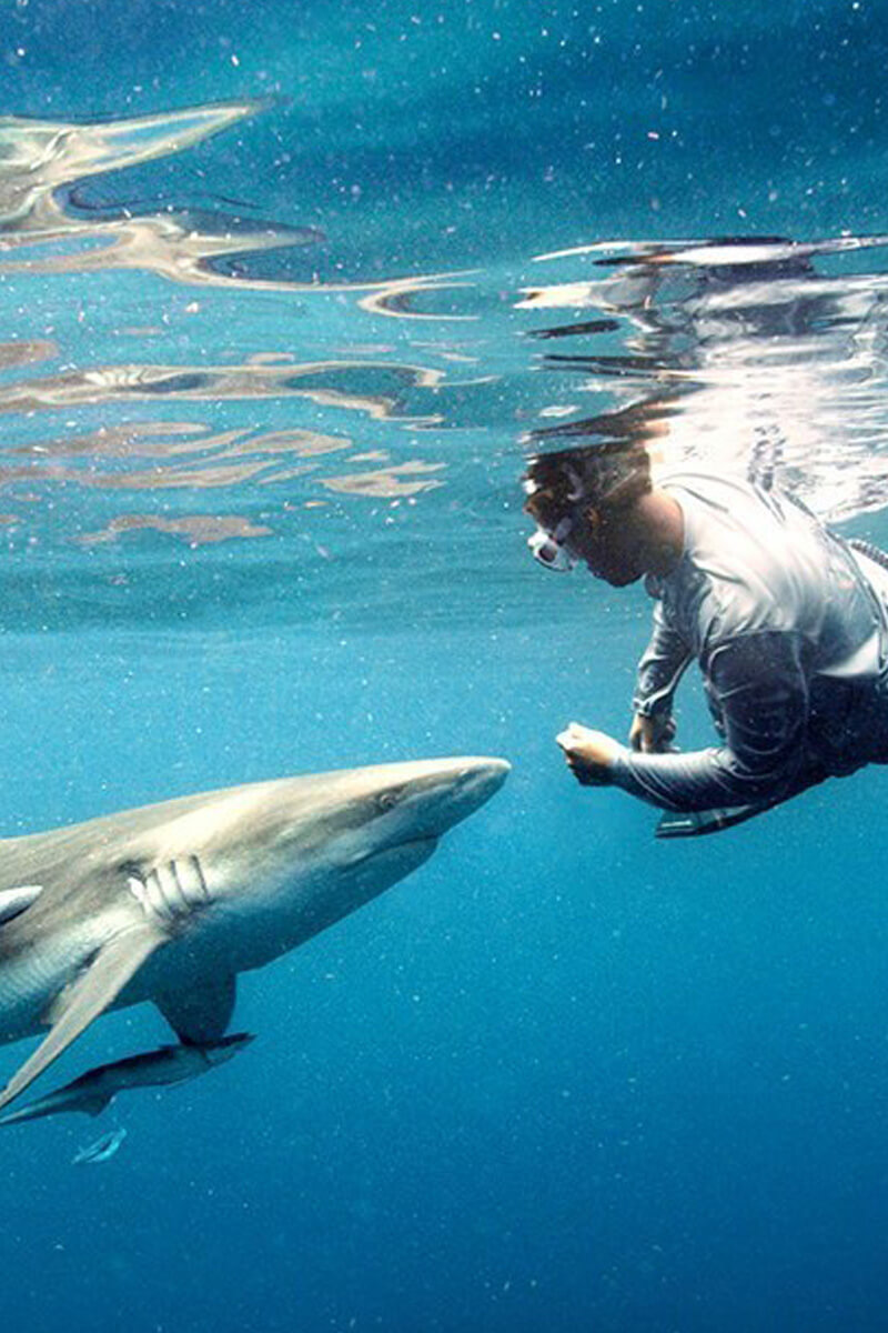 An image of shark diving Captain Bryce Rohrer.